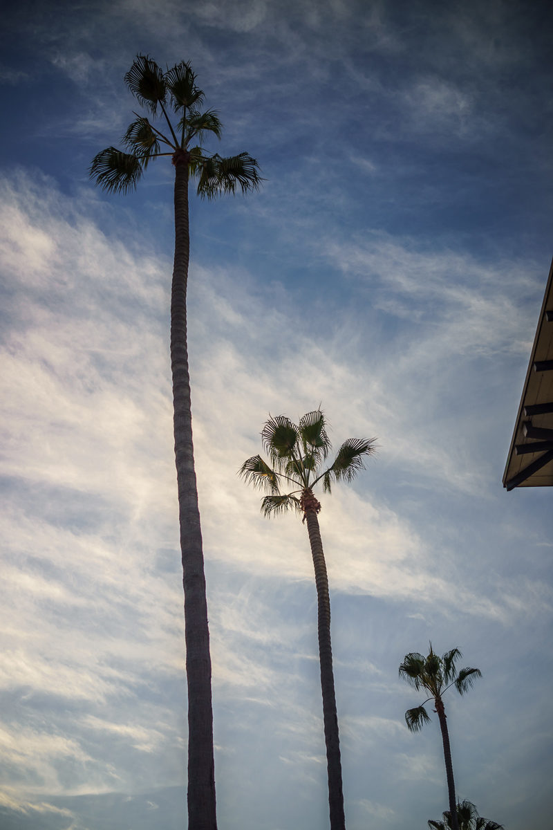 Palm Trees La Jolla Cove - Grande Colonial Hotel La Jolla review by popular DC travel blogger Alicia Tenise