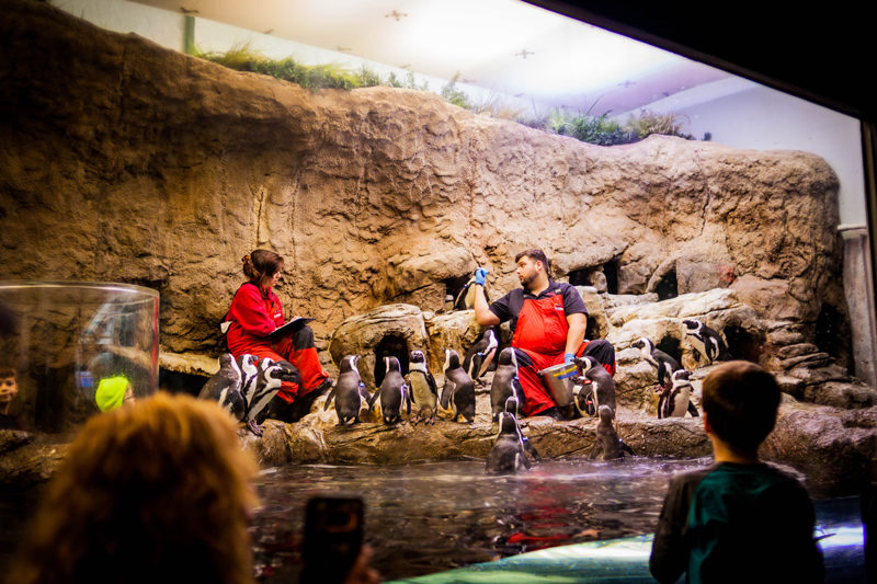 Ripley's Aquarium of the Smokies - Things to Do in Pigeon Forge by popular travel blogger Alicia Tenise