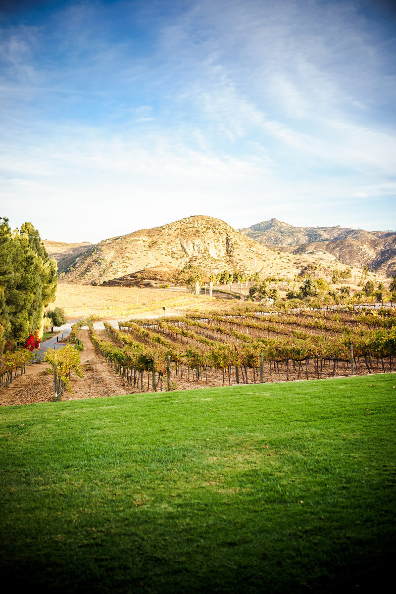 Orfila Vineyards and Winery - San Diego Travel Guide by popular travel blogger Alicia Tenise