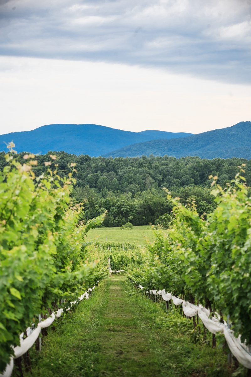 Things to Do in Charlottesville, VA by popular DC travel blogger, Alicia Tenise - 7 Wineries in Virginia You Need to Visit featured by popular Virginia travel blogger, Alicia Tenise