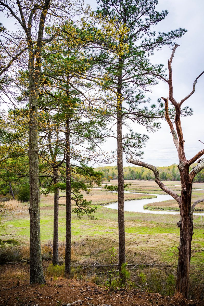 York River State Park Hiking Trail - The Ultimate Williamsburg Travel Guide featured by popular DC travel blogger, Alicia Tenise