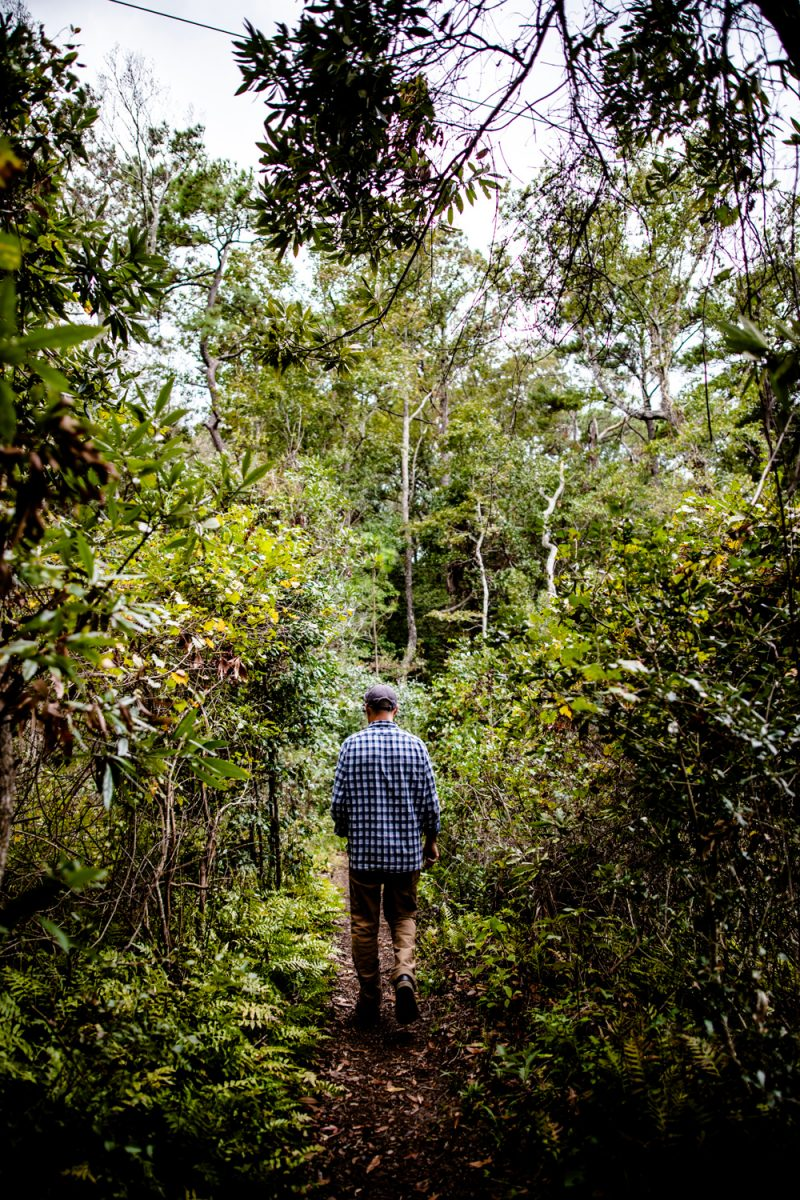 Nags Head Woods Preserve | Things to do in the Outer Banks by popular D.C. travel blogger, Alicia Tenise: image of a man walking through Nags Head Woods Preserve.