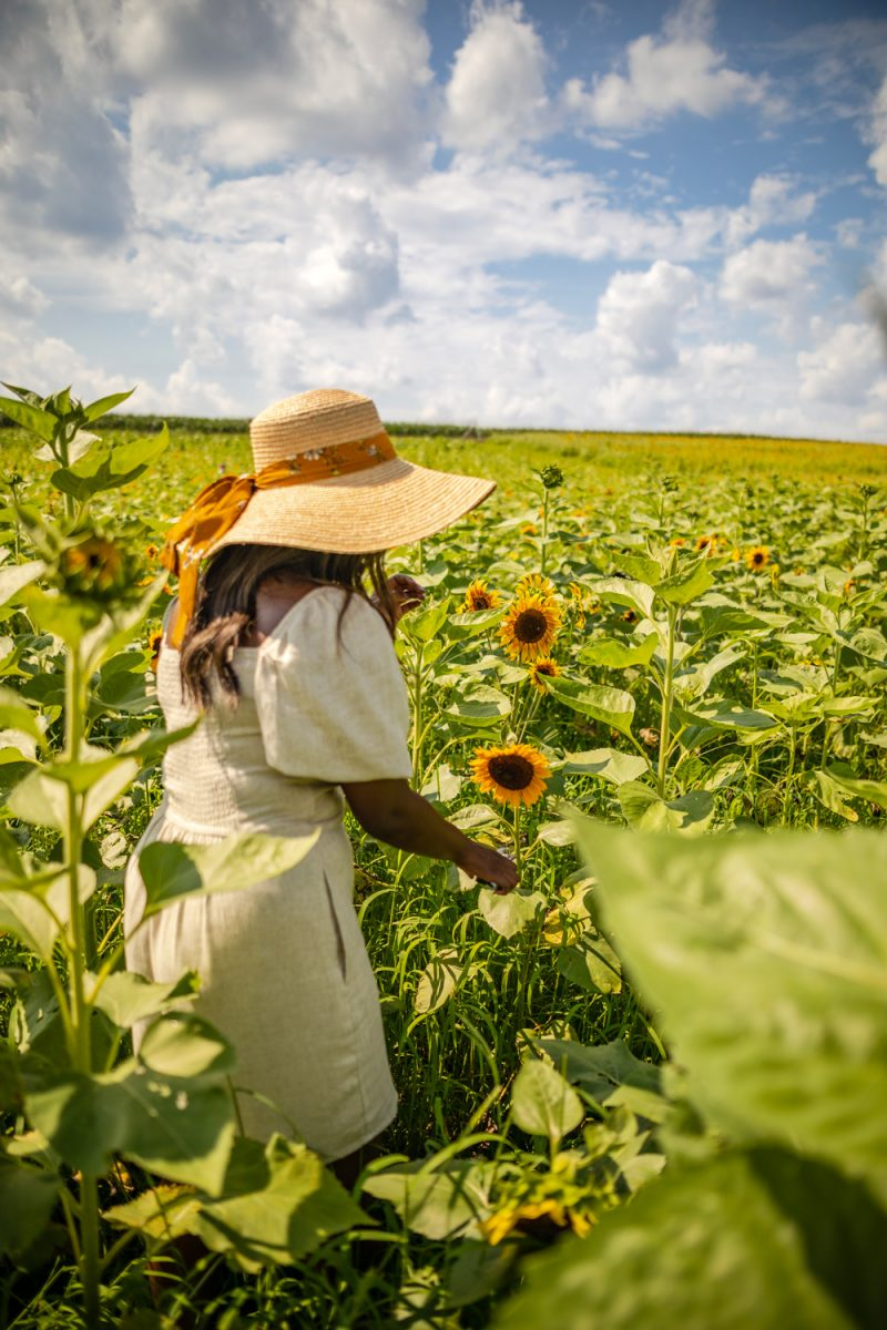 Best Sunflower Picking in Virginia | Being 30 by popular D.C. lifestyle blogger, Alicia Tenise: image of Alicia Tenise standing in a sunflower field and wearing a Hat Attack Coco Sunhat and Abercrombie and Fitch Puff-Sleeve Linen-Blend Mini Dress.