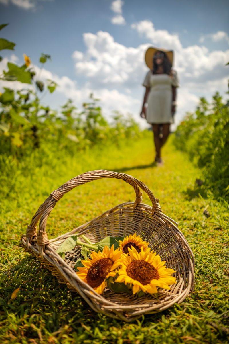 Burnside Farms in Haymarket Virginia | Being 30 by popular D.C. lifestyle blogger, Alicia Tenise: image of Alicia Tenise standing in a sunflower field and wearing a Hat Attack Coco Sunhat and Abercrombie and Fitch Puff-Sleeve Linen-Blend Mini Dress.