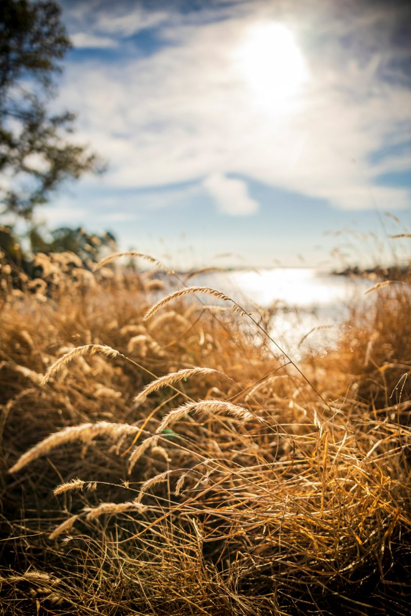 The Tides Inn |Tides Inn in Irvington by popular D.C. travel blogger, Alicia Tenise: image of some brown grass.