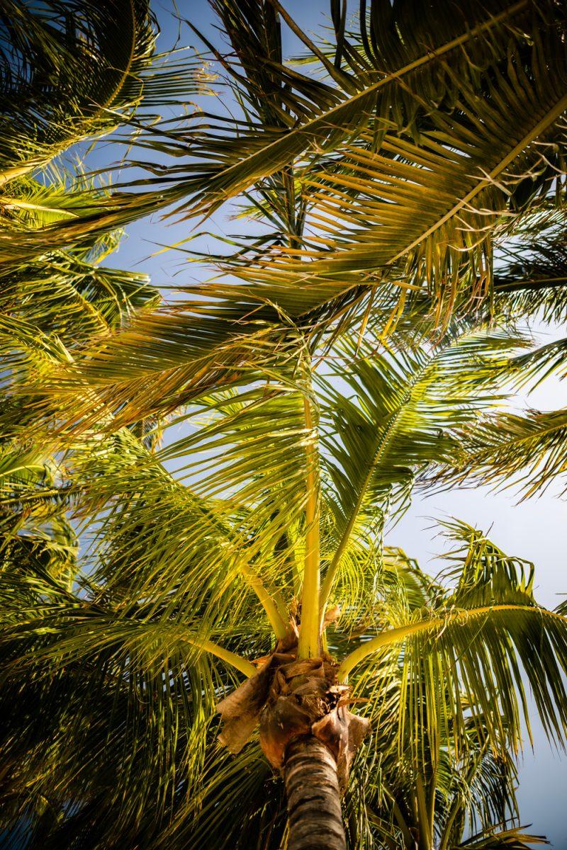 Isla Bella Beach Resort |Florida Keys Road Trip by popular D.C. travel blogger, Alicia Tenise: image of a palm tree.