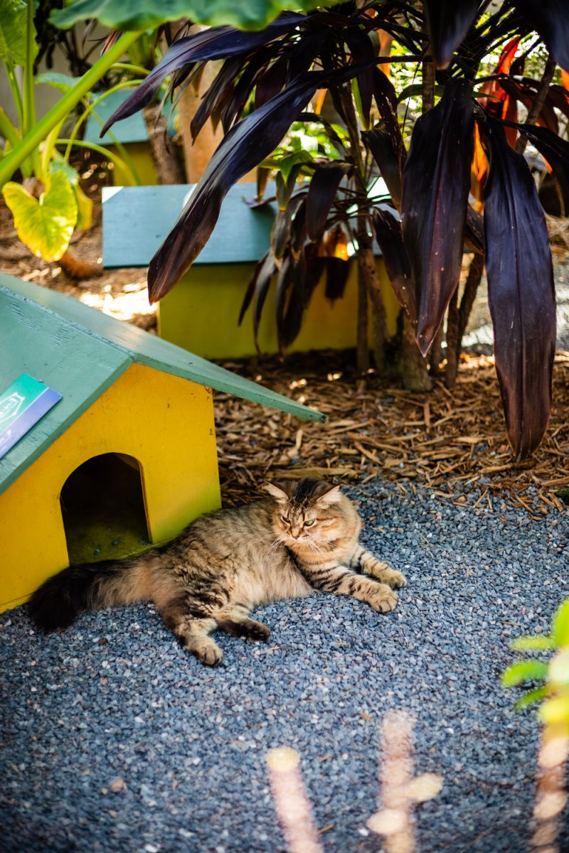 Hemingway House Key West |Florida Keys Road Trip by popular D.C. travel blogger, Alicia Tenise: image of a cat laying down in front of a yellow cat house.