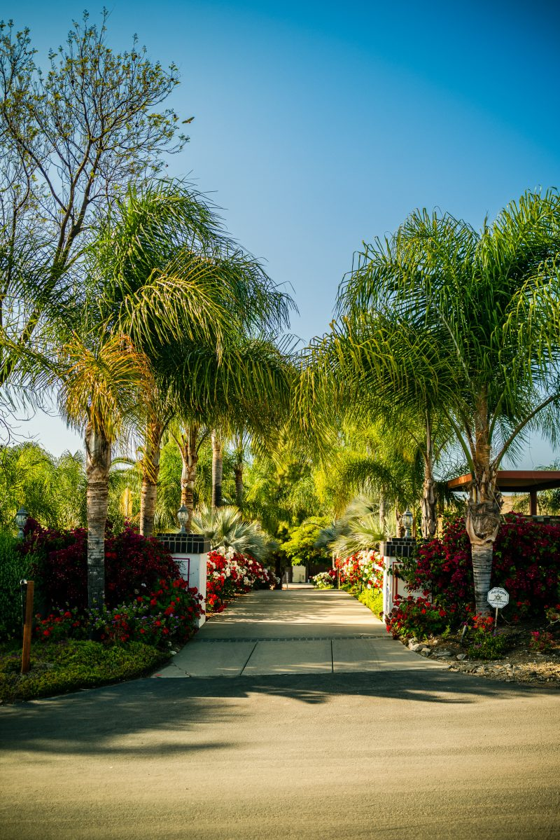 3 Wineries to Visit in the Northern San Diego Area for the Red Wine Lover featured by top LA travel blogger, Alicia Tenise: Doffo Winery | San Diego Wineries by popular LA lifestyle blogger, Alicia Tenise: image of the palm tree lined entrance to Doffo winery.